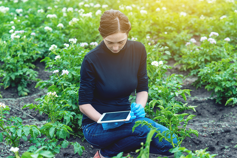 Scientist with tablet in potato field